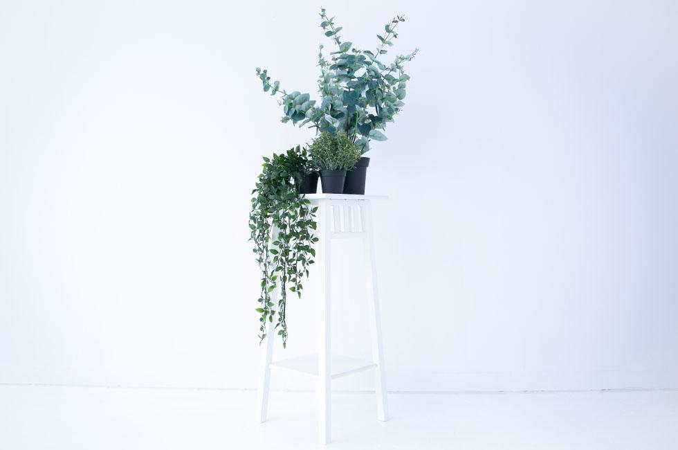 観葉植物(レプリカ)