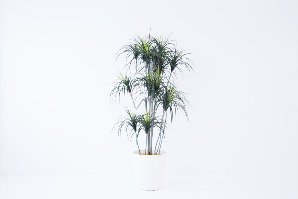 観葉植物(レプリカ)2